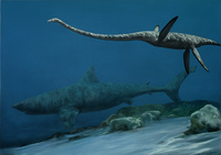 Plesiosaur and Shark