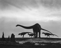 Diplodocus and Allosaurs