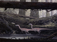Two Coelophysis